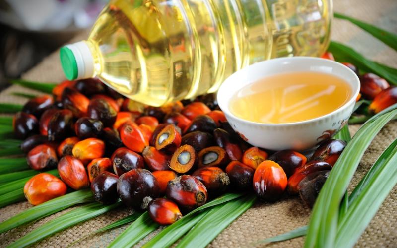 palmyağı Palm Yağı Nedir ? Palmiye Yağı Zararları Nelerdir?