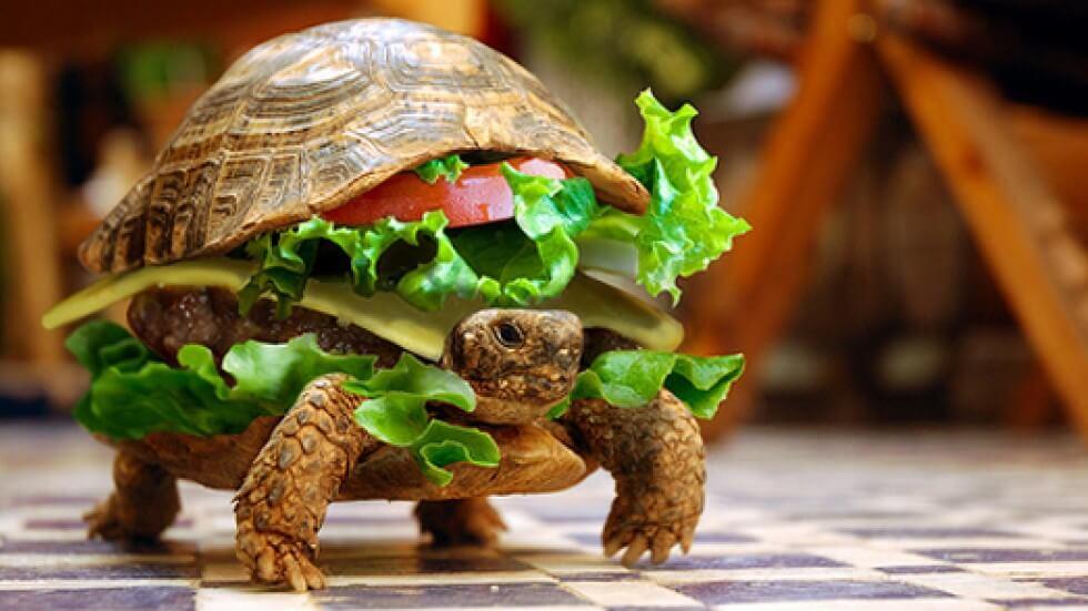 turtle-burger-l-slow-food-diyetixyen Slow Food Beslenme Akımı