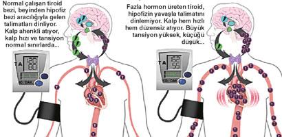 fft16_mf481583 Tiroid Hastaları İçin Beslenme Önerileri